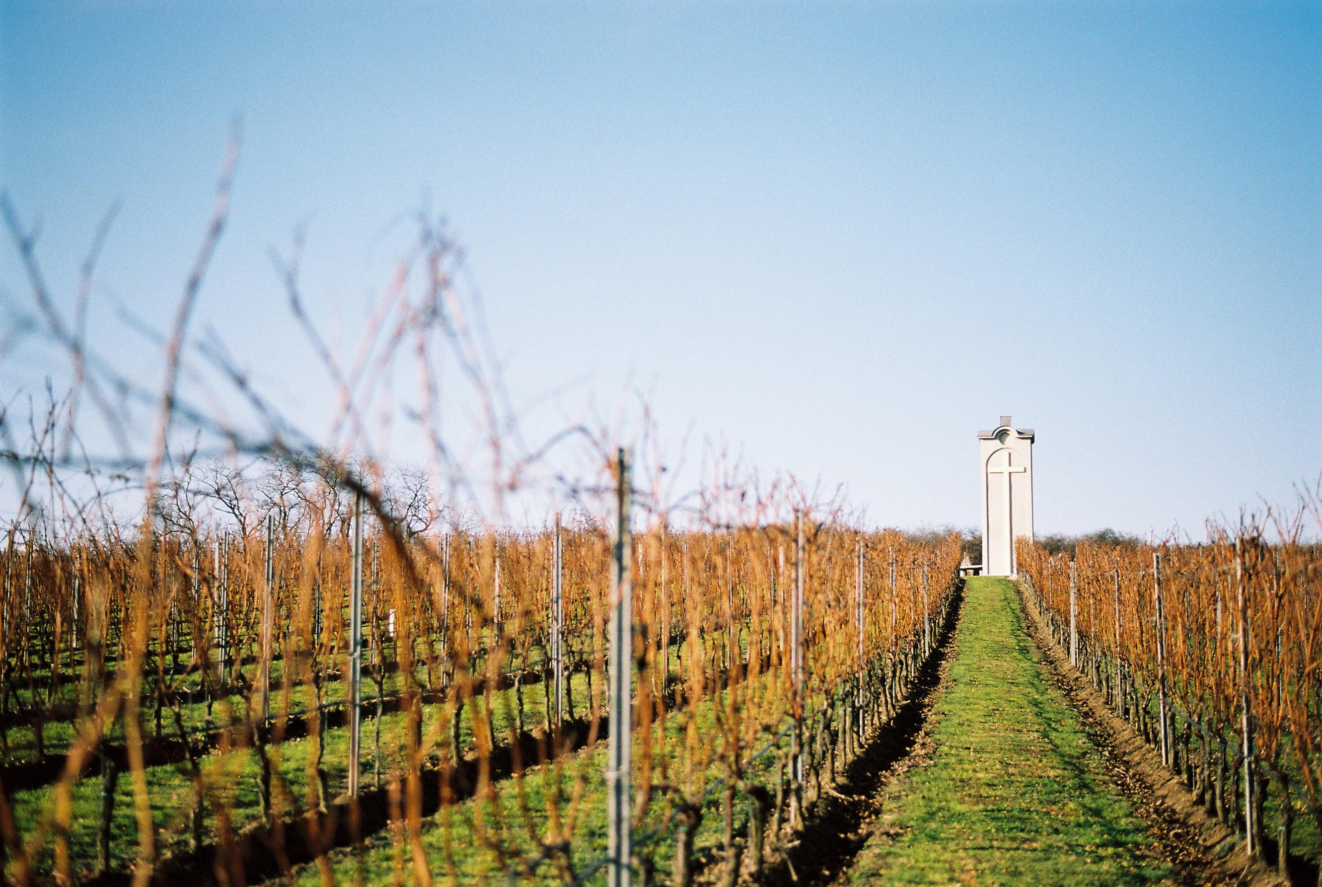 Viniče Modrého Portugalu vo vinárstve Terra Parna