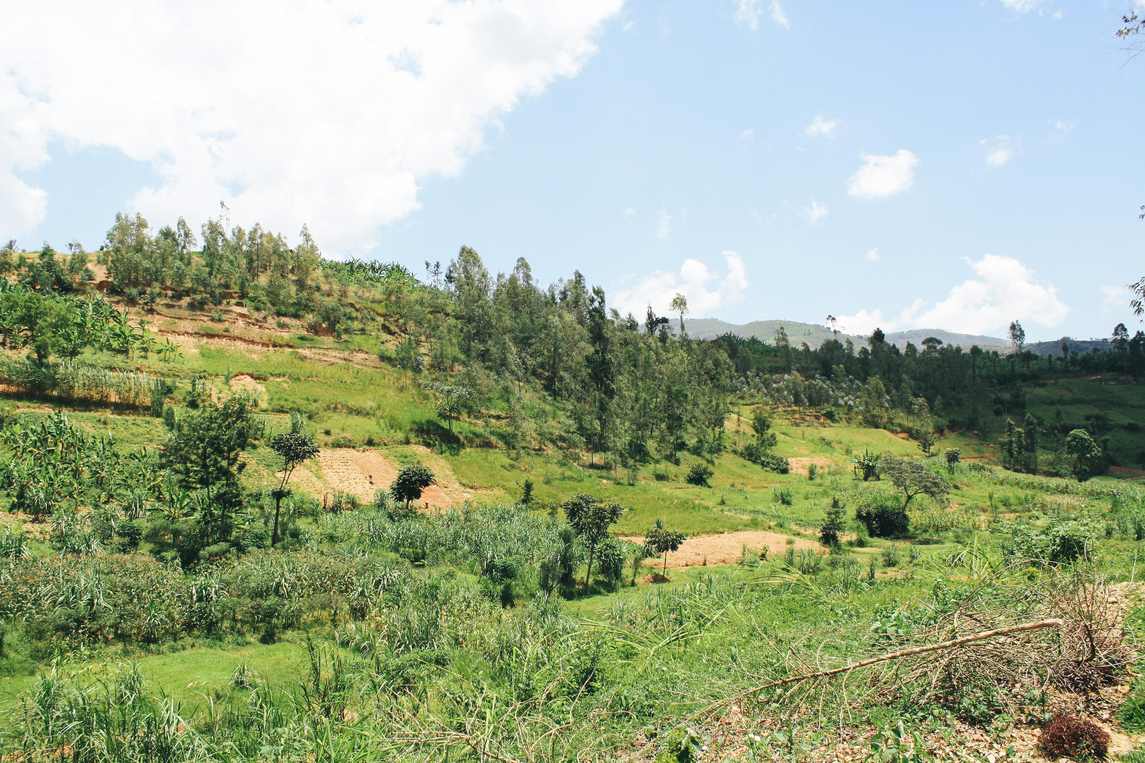 rwandské mikrofarmárstvo