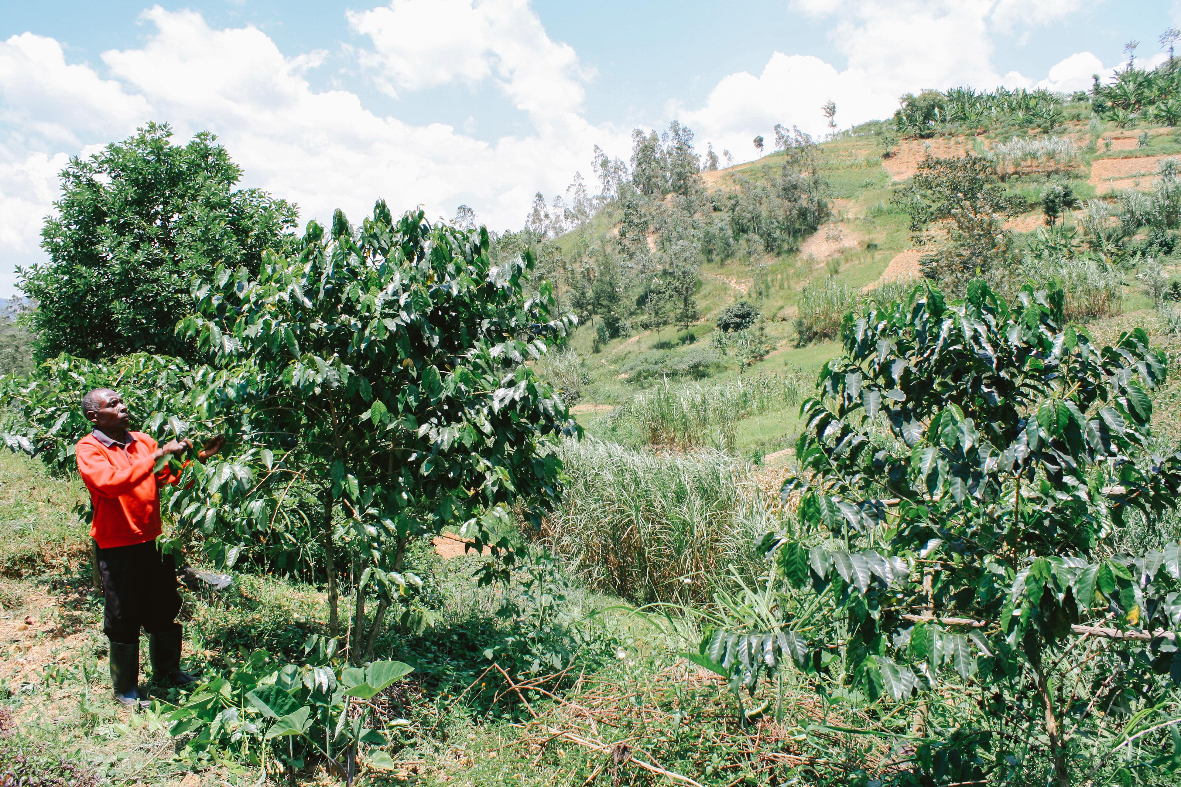 Farmár a jeho kávovník